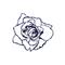 Rosa Ingenito's avatar
