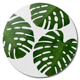 Monstera Leaf III