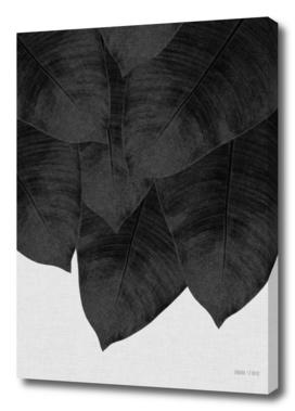 Banana Leaf II BW
