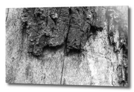Close-up tree bark