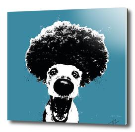 afro dog
