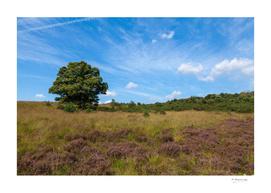 Beautiful landscape at the Veluwe