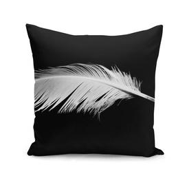 Birdy white feather