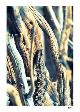 Wooden Viper