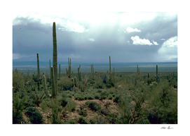 Arizona Desert with Cactus Photograph