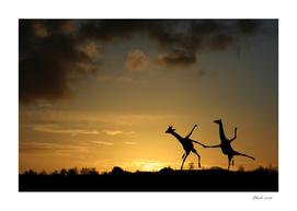 Happy Dancing Giraffes