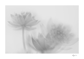 Transparent feeling