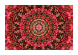 Red Foliage Mandala