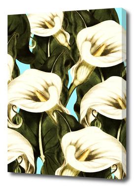 Calla Floral Botany I