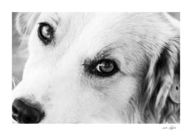 Portrait of a lovely stray dog
