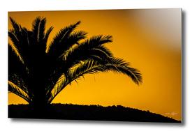 Palmtree in backlight in turkish sunset