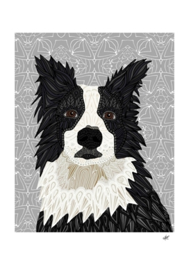 Boorder Collie