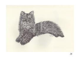 BALLPEN CAT 9