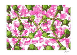 Harmony orchid