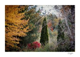 Autumns View