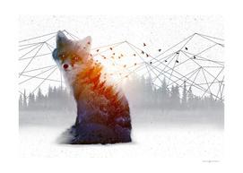 A Wilderness Within | Fox