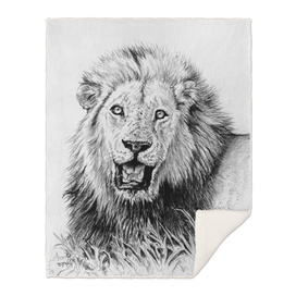 Lion Wildlife Art and Illustration pencil