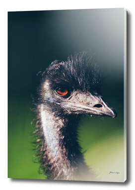 Head of emu bird with eye lit by sunlight