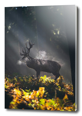 Red deer stag in misty forest