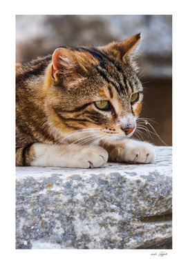Stray cat laying on the marble in Ephesus (Turkey)