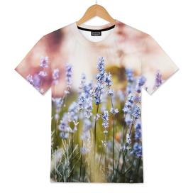 Field of Lavender 02