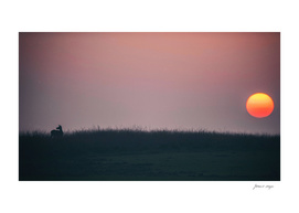 Red deer in field at sunset