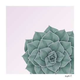 Big Green Echeveria Design