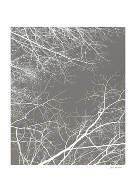 FOLIAGE SERIES Branches Impressions on gray