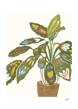 Scandi Plant