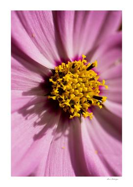 Macro shot of fresh pink flower