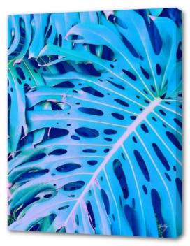 monstera blue