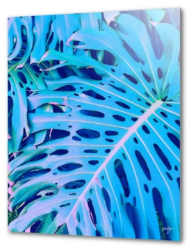 monstera blue
