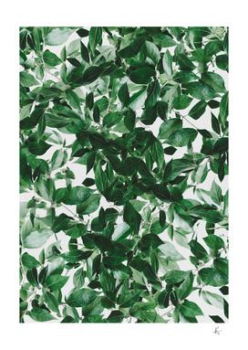 leaves greenery