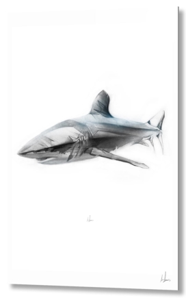 Shark I
