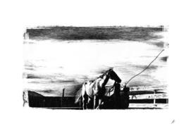 Prairie horse
