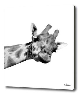 Black and White Giraffe