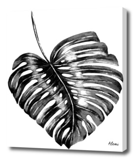 Black Monstera Leaf