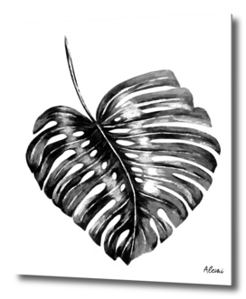 Black Monstera Leaf