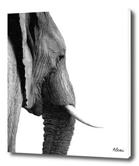 Black and White Elephant Portrait
