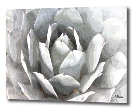 Succulent Cactus Illustration