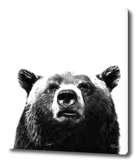 Black and White Bear