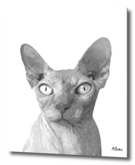 Black and White Cat Sphynx