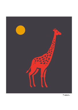 Giraffe at midnight sun