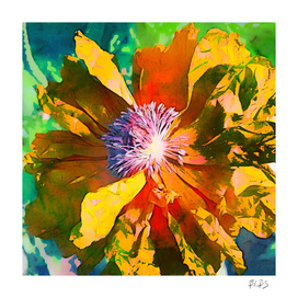 Golden - Poppy Series No. 1