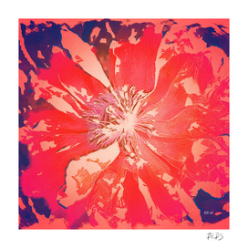 Paradise - Poppy Series No.3