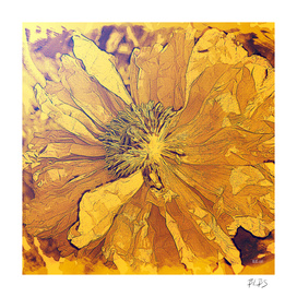 Sun - Poppy Series No.5