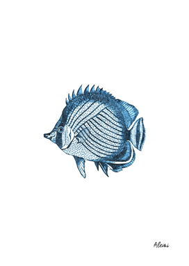 Blue Fish Illustration