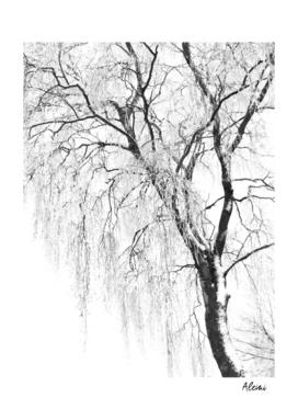 White Snow Tree