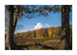 Autumn landscape at Gelderland, Netherlands