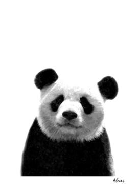 Black and White Panda